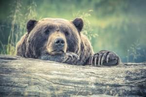 Kamp Polje Medved