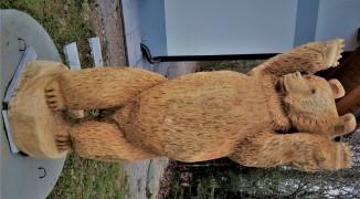 fot-rjavi-medved